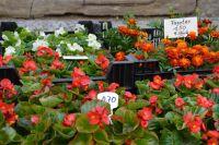 Wochenmarkt_Pflanzen